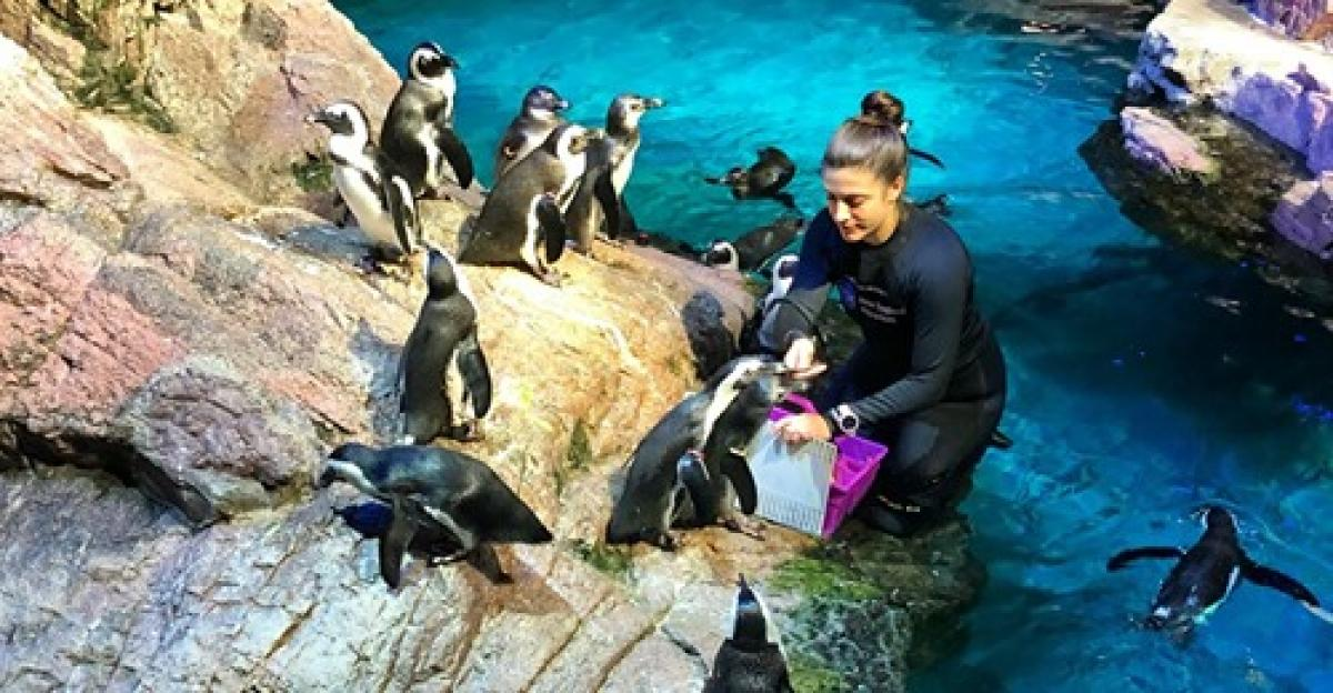 Miren Schleicher working with penguins in a previous position at the New England Aquarium.